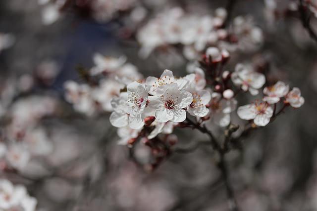 wpid-Flowering_trees_in_the_Parque_del_Oeste_23_640